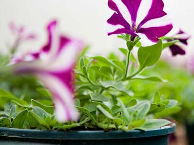 rasadnice-cvjeca-vrtnicentar