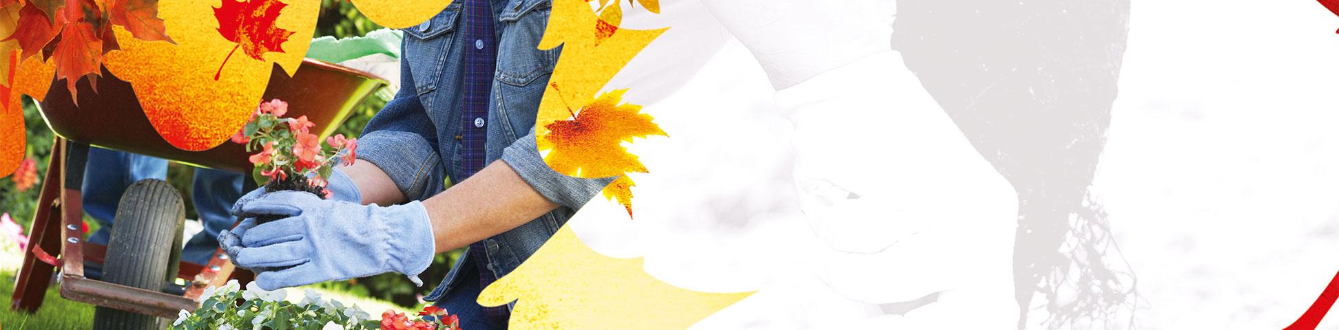 jesenja-sadnja