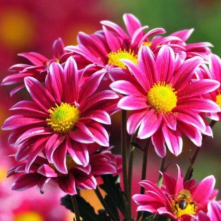 lukovice-cvijeca