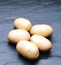 sjemenski krumpir ADORA rani bijeli