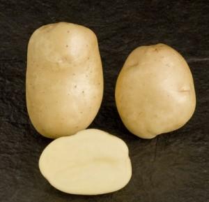 sjemenski krumpir PRIMURA rani bijeli