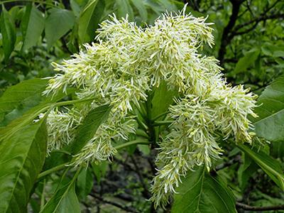 ukrasna-stabla-vrtnicentar-vsikovo
