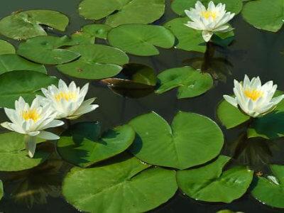 vodeno-bilje-vrtnicentar