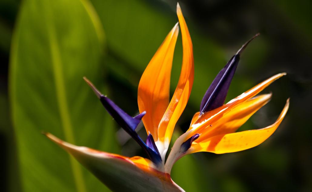 egzotično bilje
