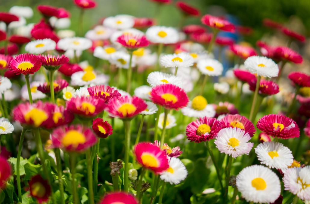 sjeme cvijeća, egzotičnog i začinskog bilja