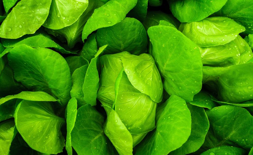 presadnice povrća, začinsko bilje