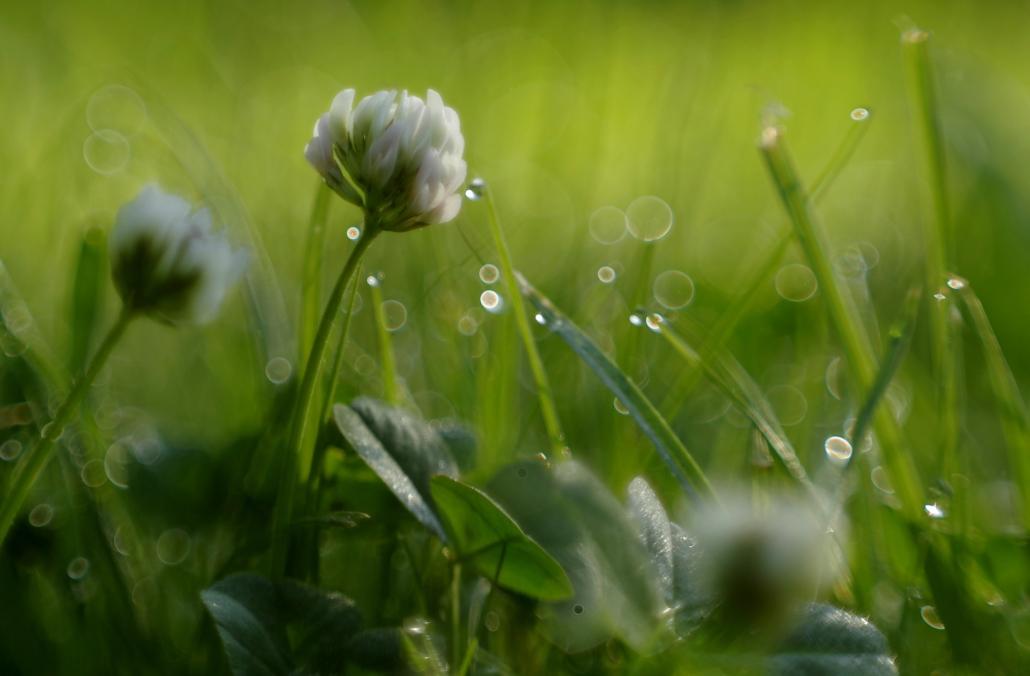 trave, travne smjese i krmno bilje
